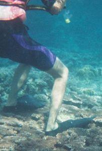 coral_diver_impact_2503681